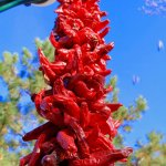 loved, loved these red chili decorating the light posts along the Plaza