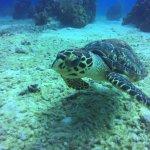 Beachcomber Grand Cayman resmi