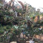 Photo of Disney's Animal Kingdom