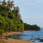 Costa Rica's Caribbean coast is home to gorgeous beaches and lush jungle!