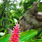 Over 25% of the land in Costa Rica is protected in the form of parks & refuges!