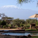 View from the restaurant: pool and Kilimanjaro!