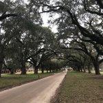 Photo de Magnolia Plantation & Gardens