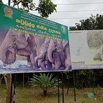 Photo de Kaudulla National Park