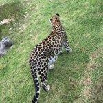 Photo de Tenikwa Wildlife Awareness Centre