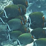 Fish at house reef