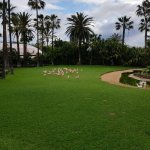 Photo de Loro Parque