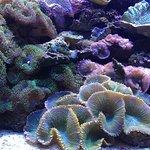 Unterwasserwelt Aquarium Barcelona