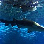 Glastunnel Aquarium Barcelona