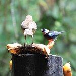 Foto de Arenal Oasis Eco Lodge & Wildlife Refuge