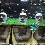 Their aquariums change each visit