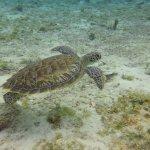 Palancar Reef Foto