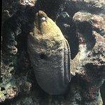 Photo of Phuket Aquarium