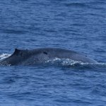 Raja & the Whales Foto