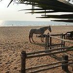 Photo of Madhu Coconut Beach Huts