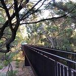 Photo de Kings Park and Botanic Garden
