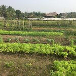Herb/Vegetable Garden