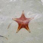 Foto de Acquarius Sea Tours