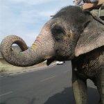 Φωτογραφία: Heritage Safari Tuk Tuk Jaipur
