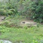 Foto de Shimba Hills Lodge