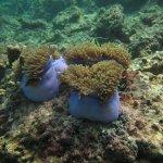 Photo of Aussie Divers Phuket