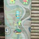 Descripcion sobre las trortugas