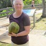 Coconut from tree at the Black Sand Beach near Hana
