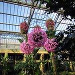 Longwood Gardens Foto