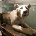 Foto The Buffalo Zoo