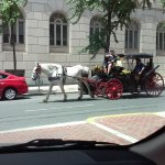 Horse carriage rides offered at the hotel grounds.