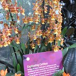 Orchids that look like they come from another planet.
