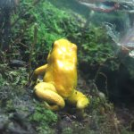 Absolutely love the frogs, and the colors - blue, yellow, and white.