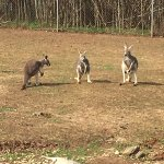 Photo de Kentucky Down Under Adventure Zoo