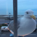 It looked so good this seagull wanted to join us. He couldn't get in don't worry