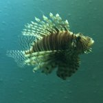 Photo of Texas State Aquarium