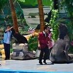 Show de lobos y foca