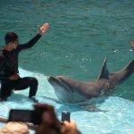 Saludo delfín