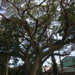 Royal Botanical Gardens Foto
