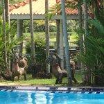 Das Ayubowan ist eine Idylle, in der man wunderbar entspannen kann. Der Pool, Massagen und die k