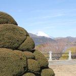 奇麗に保たれた木々と富士山