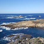 Foto de Point Lobos