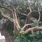 Photo of Cheung Chau Island