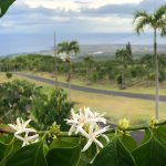 Photo of UCC Hawaii Kona Coffee Estate