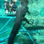 Photo de Crocosaurus Cove