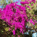 Photo de smartline Teide Mar