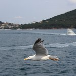 Foto de Daily Istanbul Tours