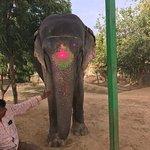 Elefantastic Foto