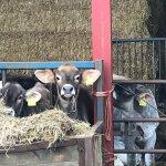 Foto de Withy Mills Farm