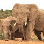 ภาพถ่ายของ Ulungele Tours & Safari's