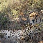 Foto de Sanbona Wildlife Reserve